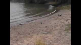 Windhund am Rhein 2