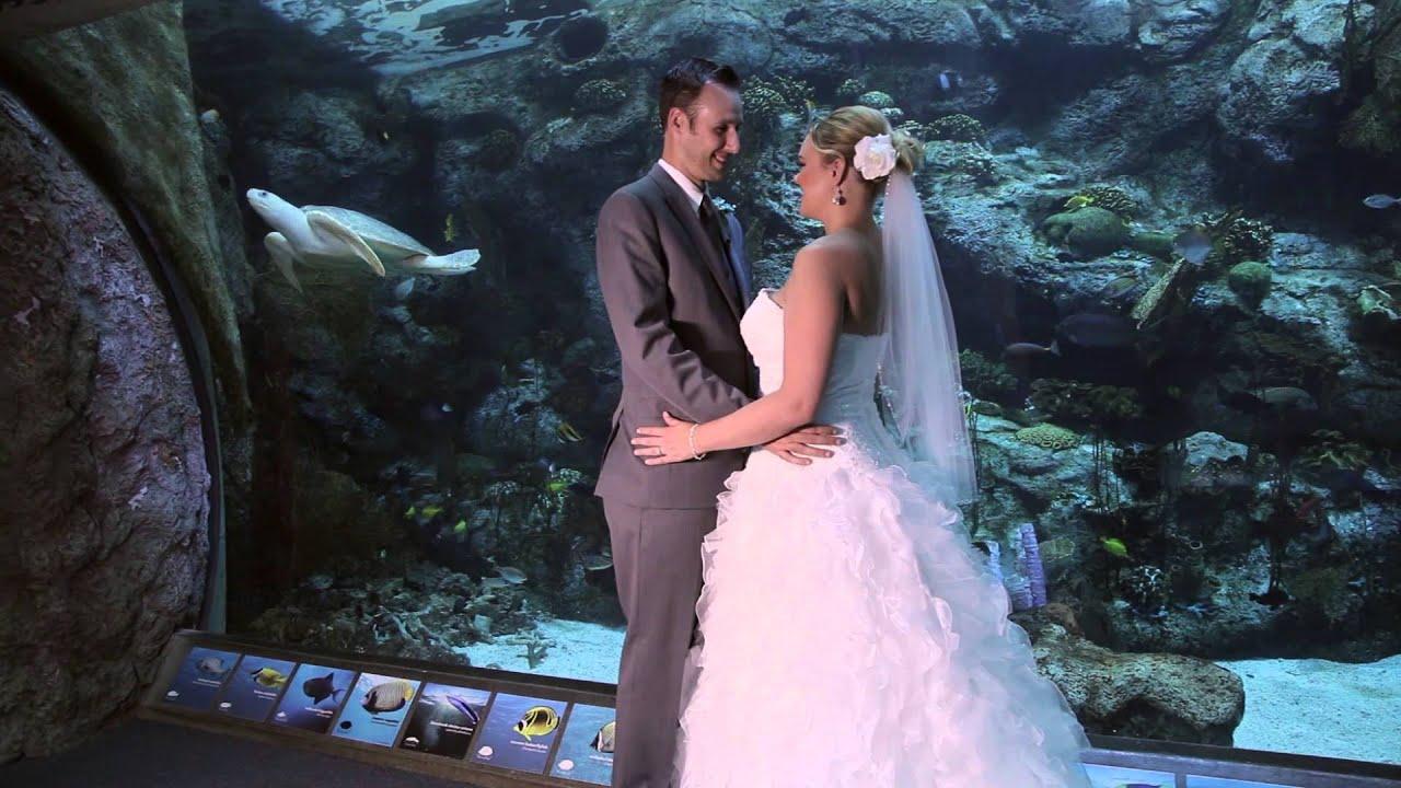 Aquarium Of The Pacific Wedding Video Troy Stephanie