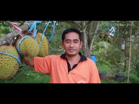 Jawa Pos Belah Durian Episode 22: Desa Wisata Durian Ngebel Ponorogo