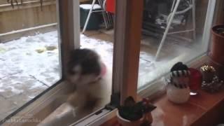 Кошки забавно падают