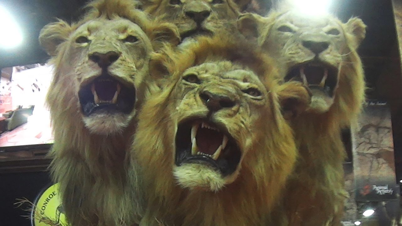 Banning Trophy Hunting | The Humane Society of the United States