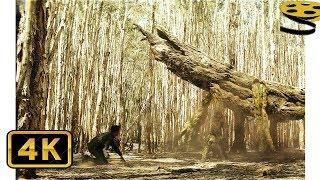 Сцена с Огромным Древесным Палочником | Конг: Остров черепа | 4K ULTRA HD