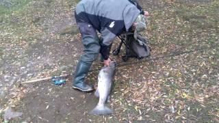 Нарвский лосось