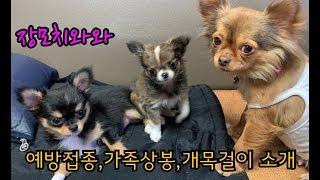 강아지 예방접종+가족상봉+개목걸이구입(장모…