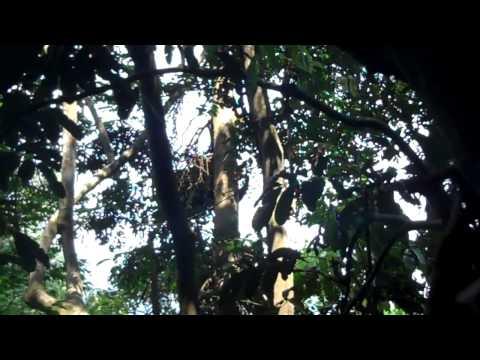 Dave's Primate Field School Experience Rwanda, 2013