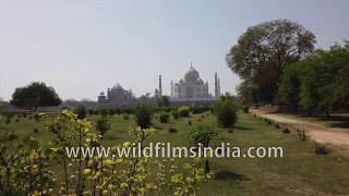 Taj Mahal as seen from Mehtab Bagh gardens across the Yamuna river, Agra