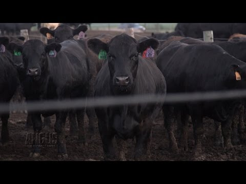 The Angus Report, June 20, 2016: Top News