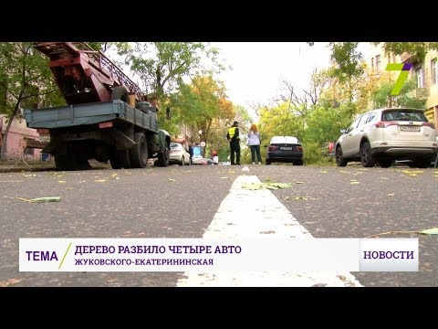 В Одессе огромное дерево упало прямо на автомобильный поток