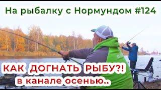 КАК ДОГНАТЬ РЫБУ в канале осенью?! / На рыбалку с Нормундом #124