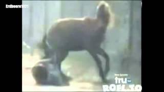 Wenn Tiere zurück schlagen || When animals strike back