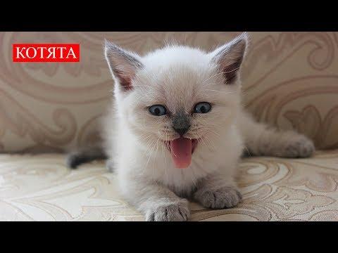 Котята | Бесконечная Любовь | Kittens