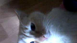 мой кот поёт кошачий гимн россии! прикол