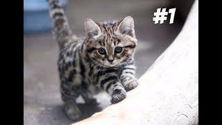 Можно ли давать кошке кости? | Всё о кошках #1