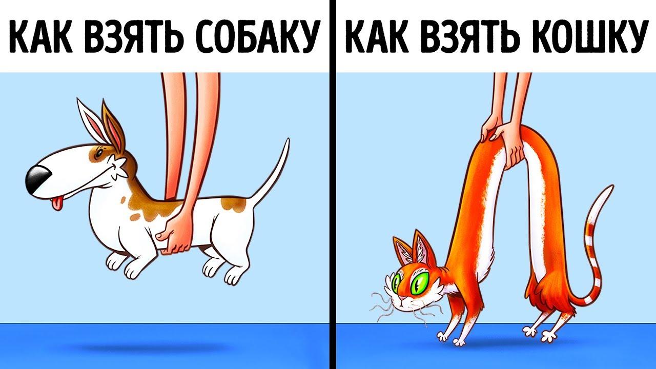 9 доказательств того, что кошки и собаки с разных планет