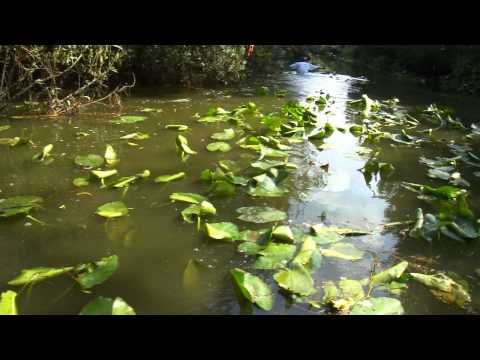 Swamp Thing Hash #15 Cayman goes swimming