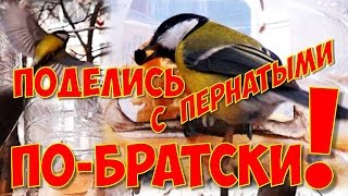 Поделись с пернатыми ПО-БРАТСКИ!!! :) ...и Кормушка для птиц!