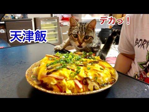 超巨大天津飯の香りに耐えられず邪魔しに来てしまった猫w