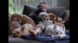 Почему не надо заводить собаку? 24 причины.
