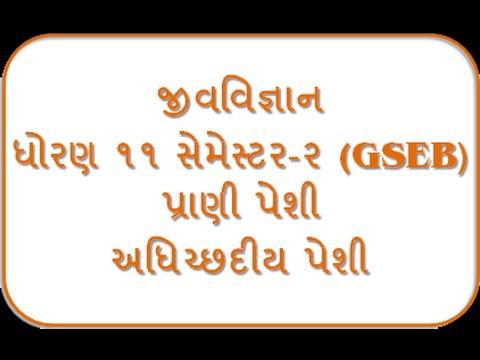 Adhichhadiy Peshi I 11th Biology Semester-2 By Jolly Joshipura Gseb