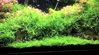 Planted Tank Cleaning