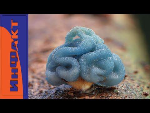 Необычные грибы мира