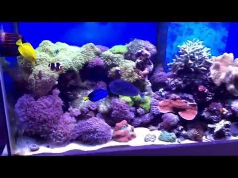 Reef tank update 2016 5ft custom tank mixed reef .... Baby clown eggs