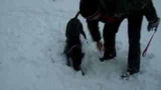 Weimaraner And Daschund Play In The Snow!!