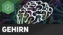 Das Gehirn - Zentrales Nervensystem (ZNS) ● Gehe auf SIMPLECLUB.DE/GO & werde #EinserSchüler
