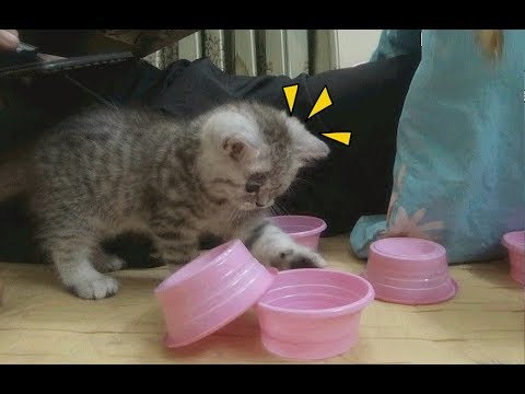Two Kittens Play With Bowl So Crazy | kittens funny | Meo Cover Home