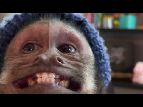 El mono George abriendo regalos | GEORGIE THE Monkey #1