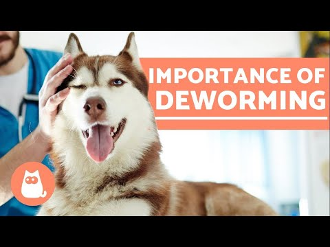 Pet Corner - DEWORMING DOGS - 5 Reasons it is Important