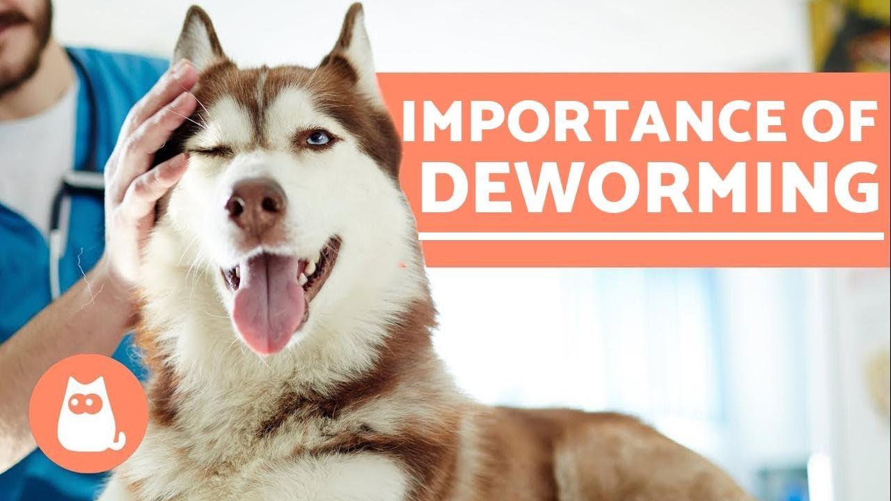 deworming vélemények)
