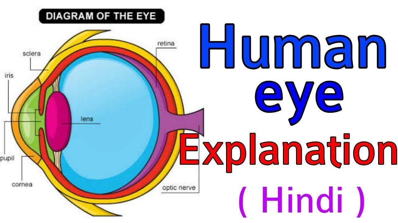 human eye science hindi easy explanation  [ 1280 x 720 Pixel ]