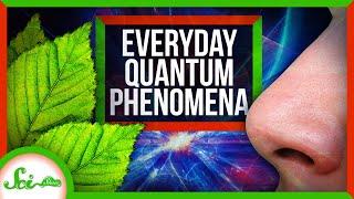 How Quantum Mechanics Affects Your Life