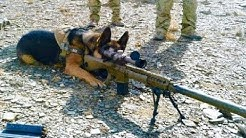 Эти Собаки Побили Все Рекорды