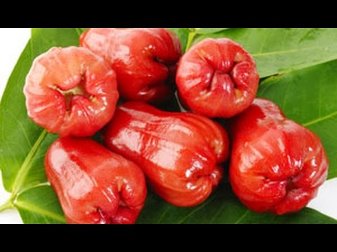 Rose Apple Fruit Health Benefits