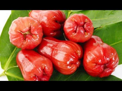Rose Apple Fruit Health Benefits
