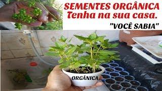 COMO FAZER SEMENTES ORGÂNICA EM CASA
