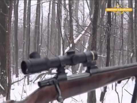 Охота на кабана и косулю Охота и рыбалка в регионах России