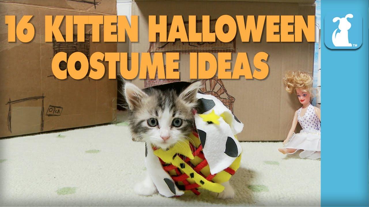 16 kitten halloween costume ideas kitten love youtube - Halloween Costumes For Kittens Pets