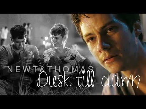 ➳Newt & Thomas | Dusk Till Dawn