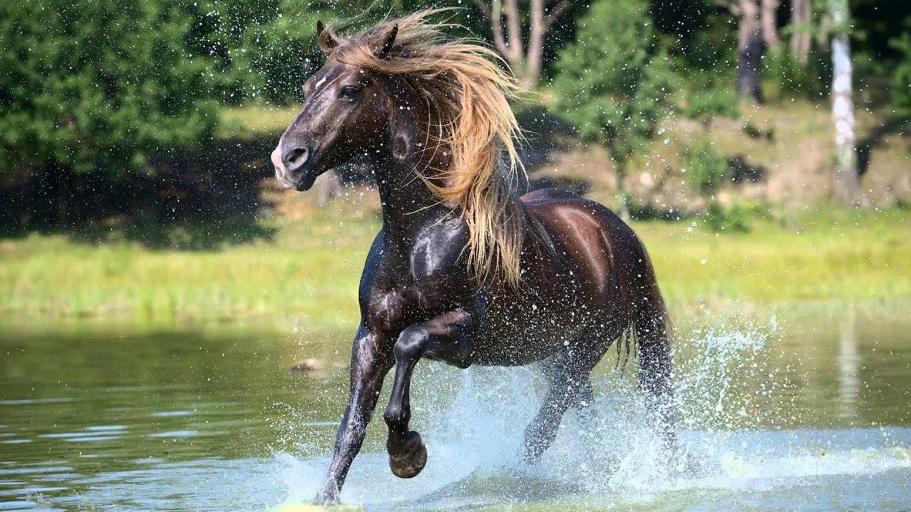 Fotoshoot paarden in de natuur  YouTube