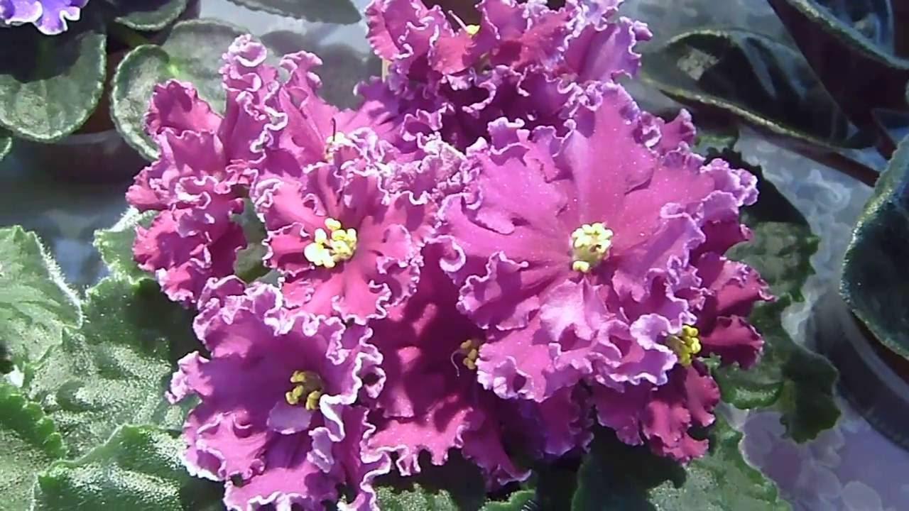 Красивые картинки с цветами скачать бесплатно