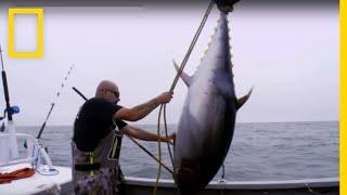 سمكة التونة العنيدة:خلاف صيد السمك | ناشونال جيوغرافيك أبوظبي