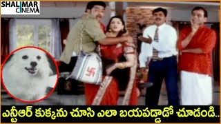JR. NTR, Nagma, Aarthi Agarwal || Telugu Movie Scenes || Best Comedy Scenes || Shalimarcinema