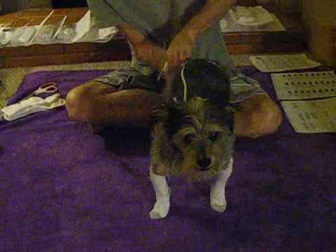 how to put home made elastic sock suspenders on your dog youtube. Black Bedroom Furniture Sets. Home Design Ideas