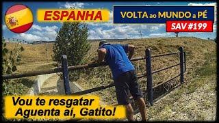 SAV #199 | VEM PRA CÁ GATITO | Espanha (Pancorbo x Rubena)