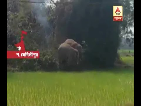Elephant attack at West Midnapur creates...