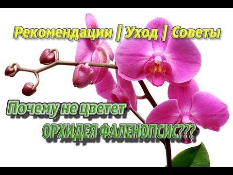 Вот почему не цветет орхидея. Советы и рекомендации по уходу