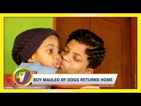 Boy Mauled by Dogs Returned to Jamaica